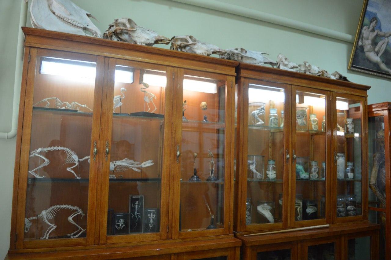 Франківців запрошують на безкоштовні екскурсії до музею анатомії (відеосюжет)