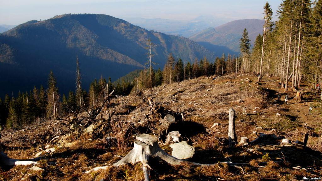 Верховна Рада схвалила мораторій на рубку лісу на схилах Карпат