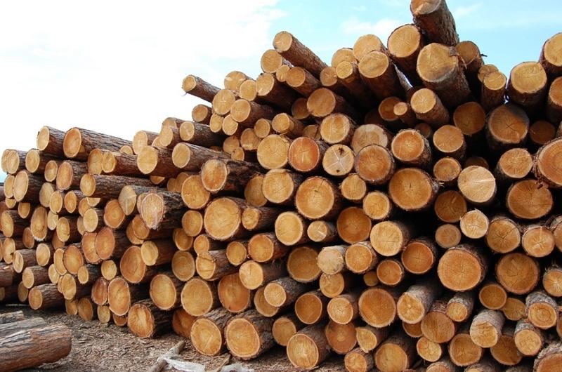 На Долинщині правоохоронці затримали вантажівку з краденим хвойним лісом