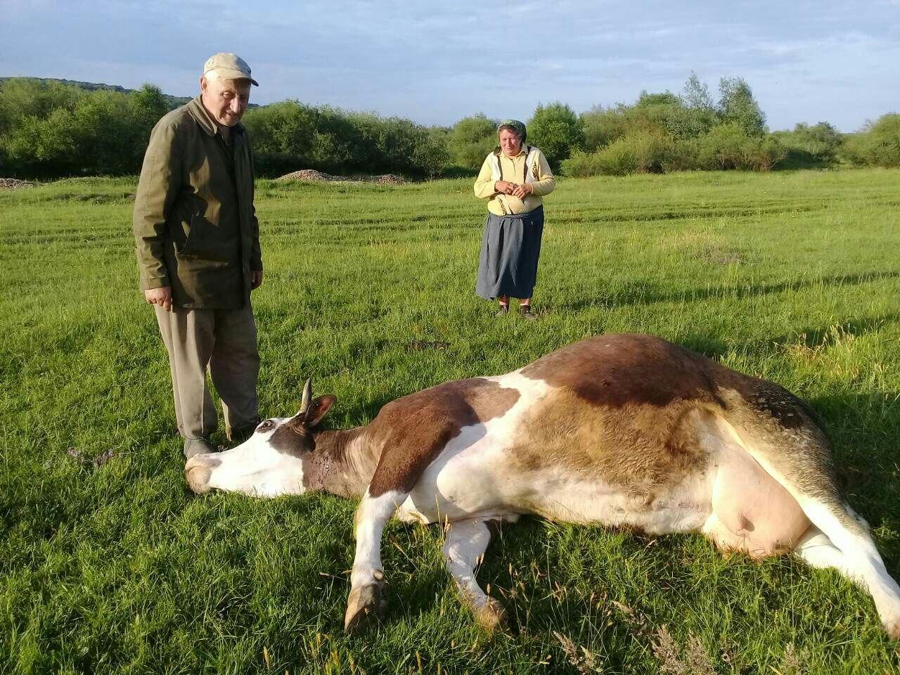 Надзвичайні події, пов'язані із отруєнням людей та захворюванням худоби у Галицькому районі, розслідуватиме спеціальна комісія