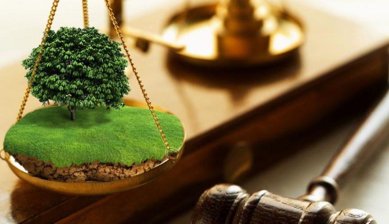 На Прикарпатті через суд державі повернули земельну ділянку вартістю понад 7 мільйонів