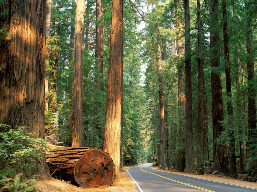 За використання лісових ресурсів Прикарпаття бюджет отримав понад 59,5 мільйонів гривень