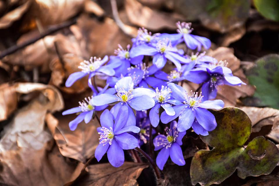Прикарпатець показав захоплюючі світлини весни у Дністровському каньйоні (фоторепортаж)