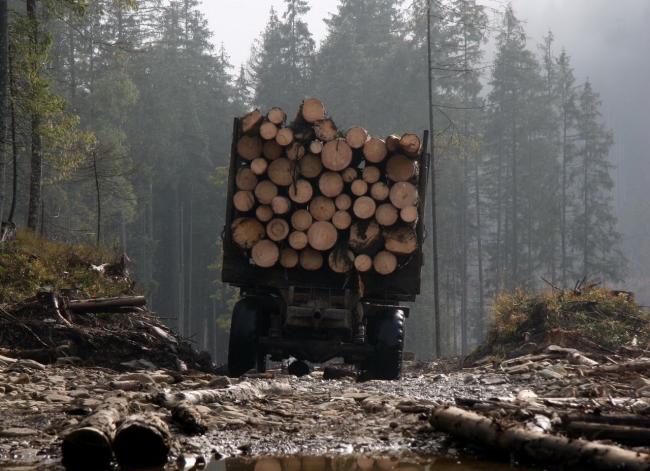 Хто вирубує ліси на Прикарпатті і чому штрафи не зупиняють (відеосюжет)